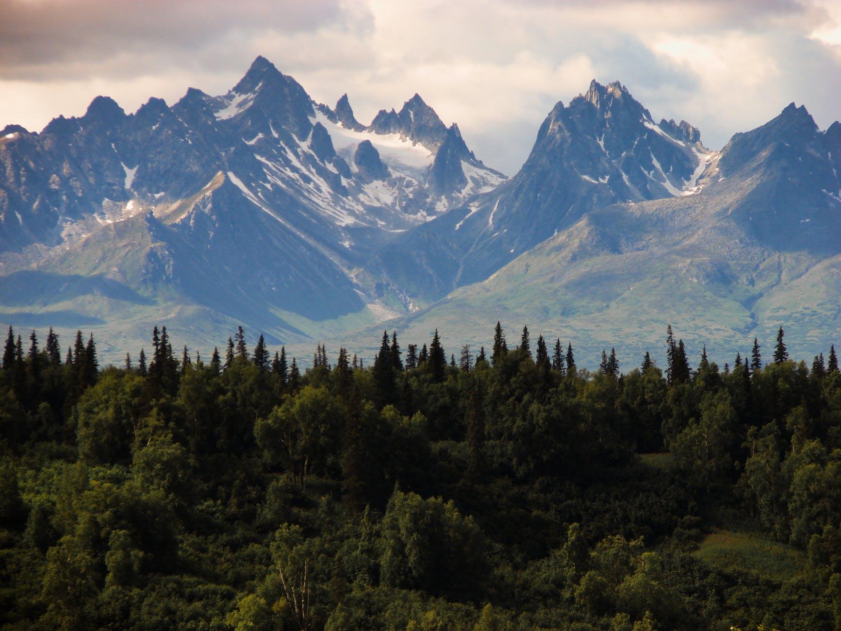 wood landscape mountains nature